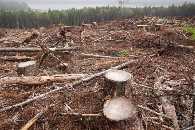 Poll reaffirms strong public support for clearcutting crackdown   Ecology  Action Centre