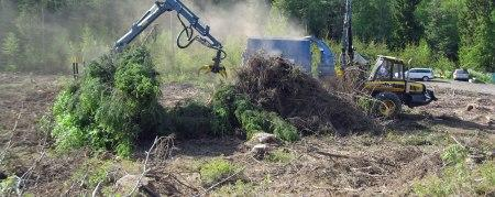 Whole tree biomass harvesting