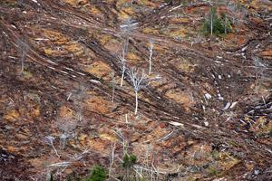 Nova Scotia achieves the worst possible scenario for forest biomass energy