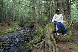 a boy sits on a tree root in a forest